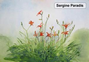 sergineparadis2